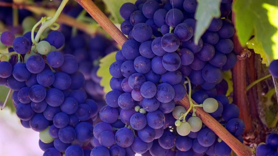 wino (1)_900x506